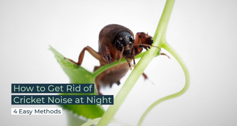 Silent Home Hub How to Get Rid of Cricket Noise at Night